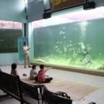 コタキナバルのミニ水族館、グリーンコネクション