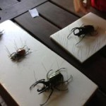 ボルネオで昆虫観察!