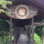 ラブックベイ・テングザル保護区(サンダカン)